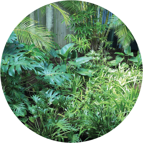 Image is circle shaped and contains a photo of a display of tropical garden plants with wood walkway